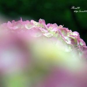 ピンク色のヴェール