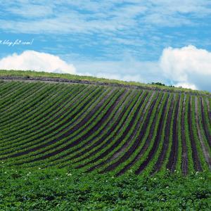 丘の緑のライン