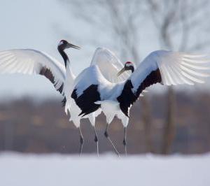 新しい出会いに鶴は羽ばたく