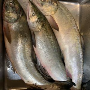 オホーツクの鮭釣り