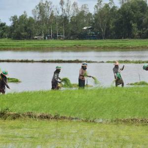 生産者米価最低価格決定 ミャンマー政府