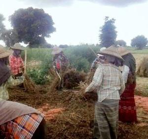 ゴマ原料高が続き世界的に需給ひっ迫、ミャンマーはチャンス