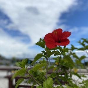 四国~岡山~兵庫遊食の旅 vol.1 GoTo!  兵庫県、徳島県、香川県