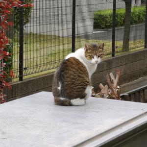 お籠もり日和と猫♪