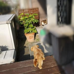 猫を追っ払っても段差は怖い♪