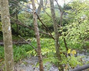 林東公園の現地調査