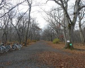 今日の青葉公園(2019/11/09)