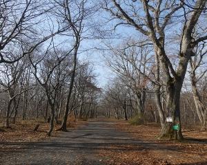 今日の青葉公園(2019/11/13)