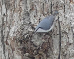 青葉公園の今日の野鳥(2019/12/14)