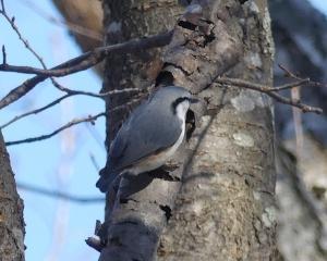青葉公園の今日の野鳥(2020/01/18)