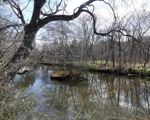 林東公園の今日の野鳥(2020/03/28)