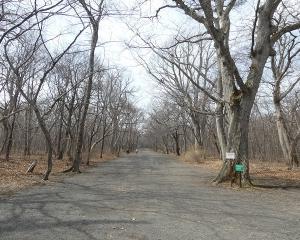 今日の青葉公園(2020/04/01)