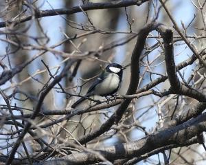 林東公園の今日の野鳥(2020/04/04)
