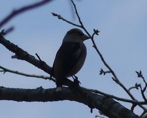 林東公園の今日の野鳥(2020/04/08)