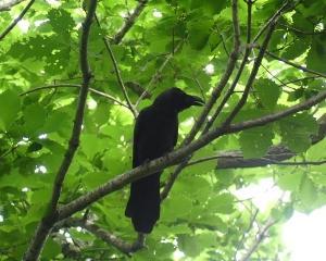 今日の青葉公園の野鳥(2020/06/20)