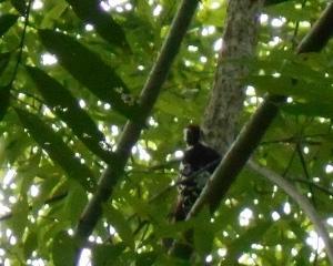 今日の林東公園の野鳥(2020/07/18)