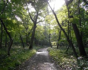 今日の青葉公園の野鳥(2020/08/05)