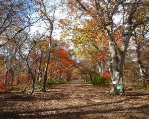 今日の青葉公園(2020/10/26)