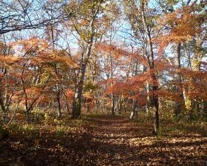 今日の青葉公園の野鳥(2020/10/27)