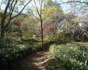 今日の林東公園の野鳥(2020/10/28)