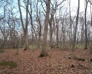 今日の青葉公園の野鳥(2020/11/26)