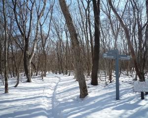 今日の青葉公園の野鳥(2021/01/17)