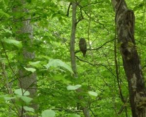 今日の青葉公園の野鳥(2021/05/27)