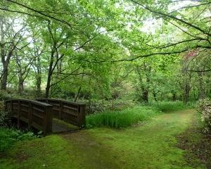 今日の林東公園の野鳥(2021/05/30)