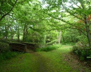 今日の林東公園の野鳥(2021/06/17)