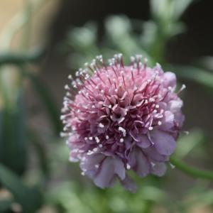 明るい陽射しの下で明るい花たち