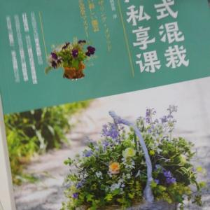 中国版プランツギャザリング教本&素敵‼育てることの出来るアクセサリー。そして、多肉ボールに多肉のリース作ろうの巻‼