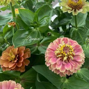 夏のキラキラ太陽が似合うお花でいっぱいにしましょ♪♪