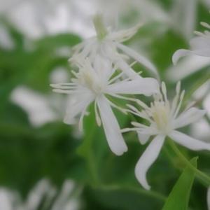 皆様は思い出の花ってありますか?&秋は大人色。「憧れの花音さんの鉢を求めて…」花音に秋色を探しに来ませんか?の巻‼
