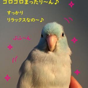 ぽんぽこペンギン♪