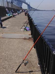 若州海浜公園で釣りをしてきましたの巻