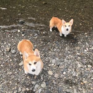 短足さん 川遊び 1