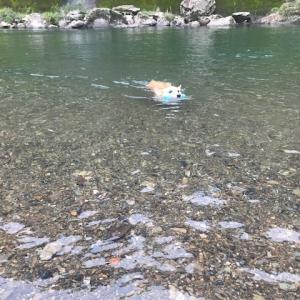 短足さん 川遊びラスト