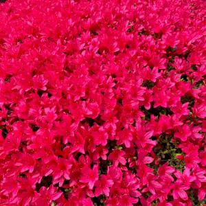 春 花粉の季節