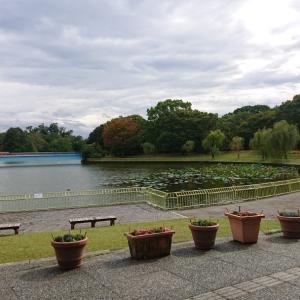 長居植物園は曇り空、時々晴れ