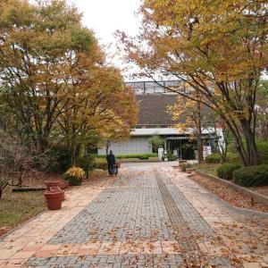紅葉がキレイですけど曇り空(*_)長居公園