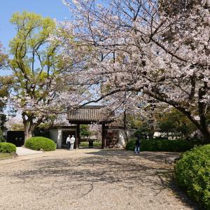 ソメイヨシノが満開なのに、天王寺界隈には人はいません