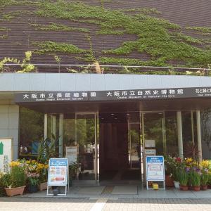 大阪市立自然史博物館大阪市立も6月から再開したよ!