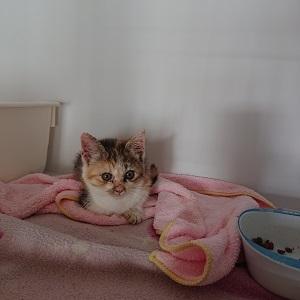 子猫のちいちゃん