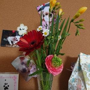 花とせなちゃんとお礼