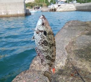 漁港でアイゴる~バリバリ喰うべし