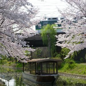 平成最後の桜と京阪電車・パート1(H31.04.07日曜日)