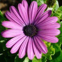 パープル 紫色のスカートを秋冬ファッションに取り入れる