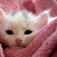 ピンクのパジャマで睡眠をとる