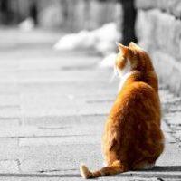縁起物 招き猫を柿沼人形で