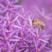 MARIHA Bee 「蜂」ネックレス 幸運、繁栄、豊かさ